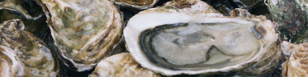 exposition-huître-du-pacifique-crassostrea-gigas-diuron-1020x255