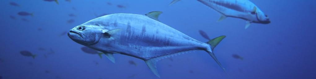 analyses-génétiques-mer-détermination-espèce-1020x255