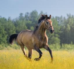 cheval-publications-scientifiques-255x240