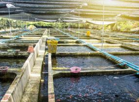 pcr-training-kit-amt-aquaculture-molecular-biology-286x210