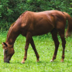 expertise-analyses-par-qpcr-santé-cheval-300x300