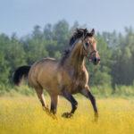 cheval-publications-scientifiques-300x300