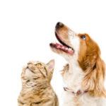 chien-chat-expertise-vétérinaire-300x300