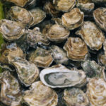 oyster-scientific-publications-300x300