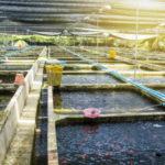 pcr-training-kit-amt-aquaculture-molecular-biology-300x300