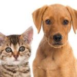 pcr-training-kit-pmt-pets-molecular-biology-300x300