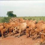 bovine-scientific-publications-300x300